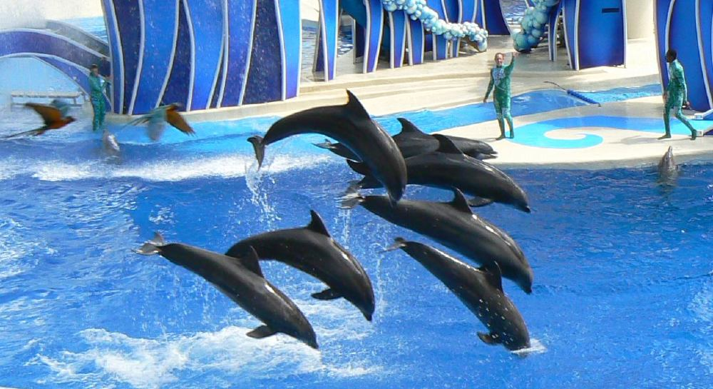 marine animals in captivity