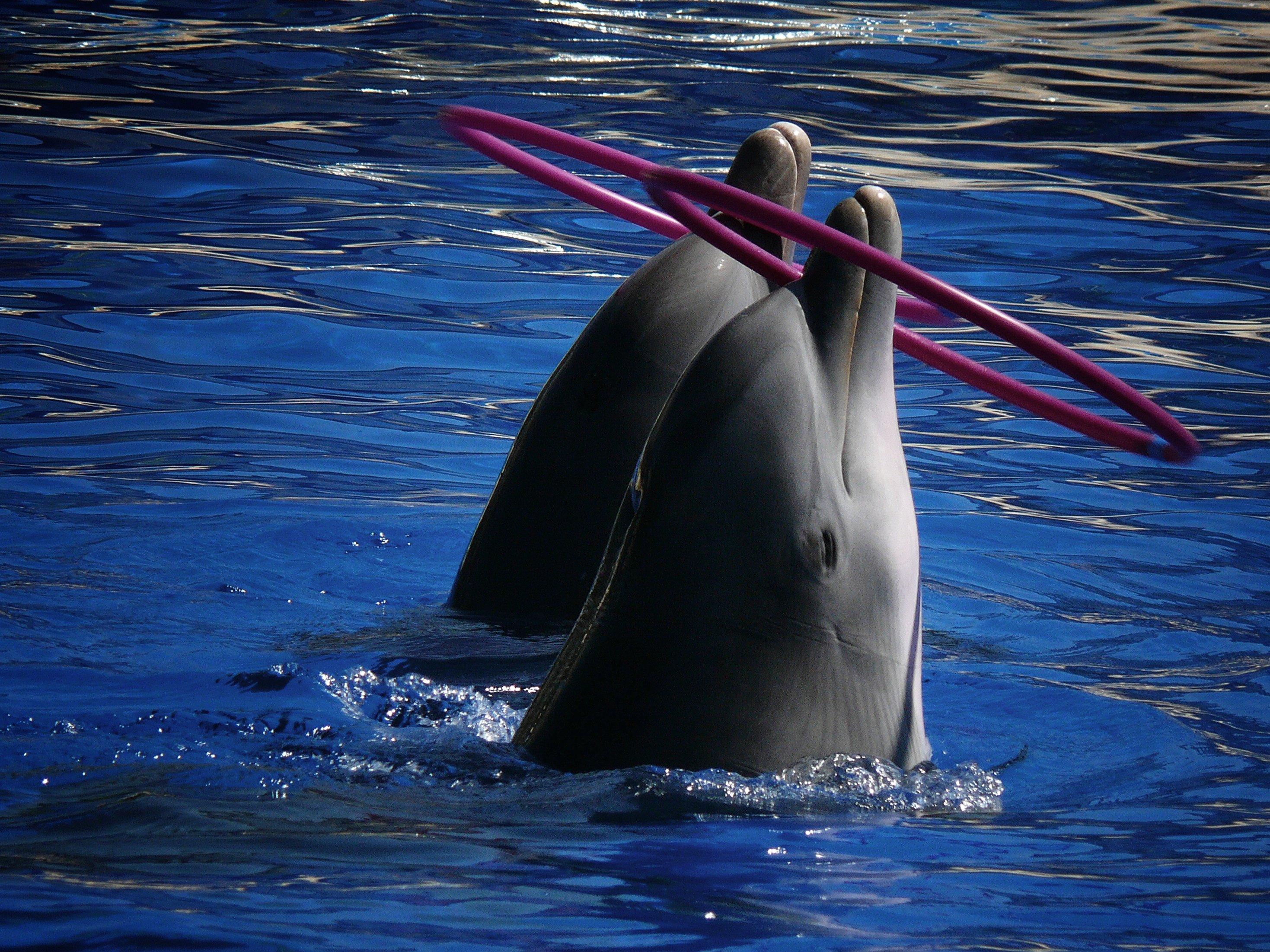 Delfin Animal | www.imgkid.com - The Image Kid Has It!