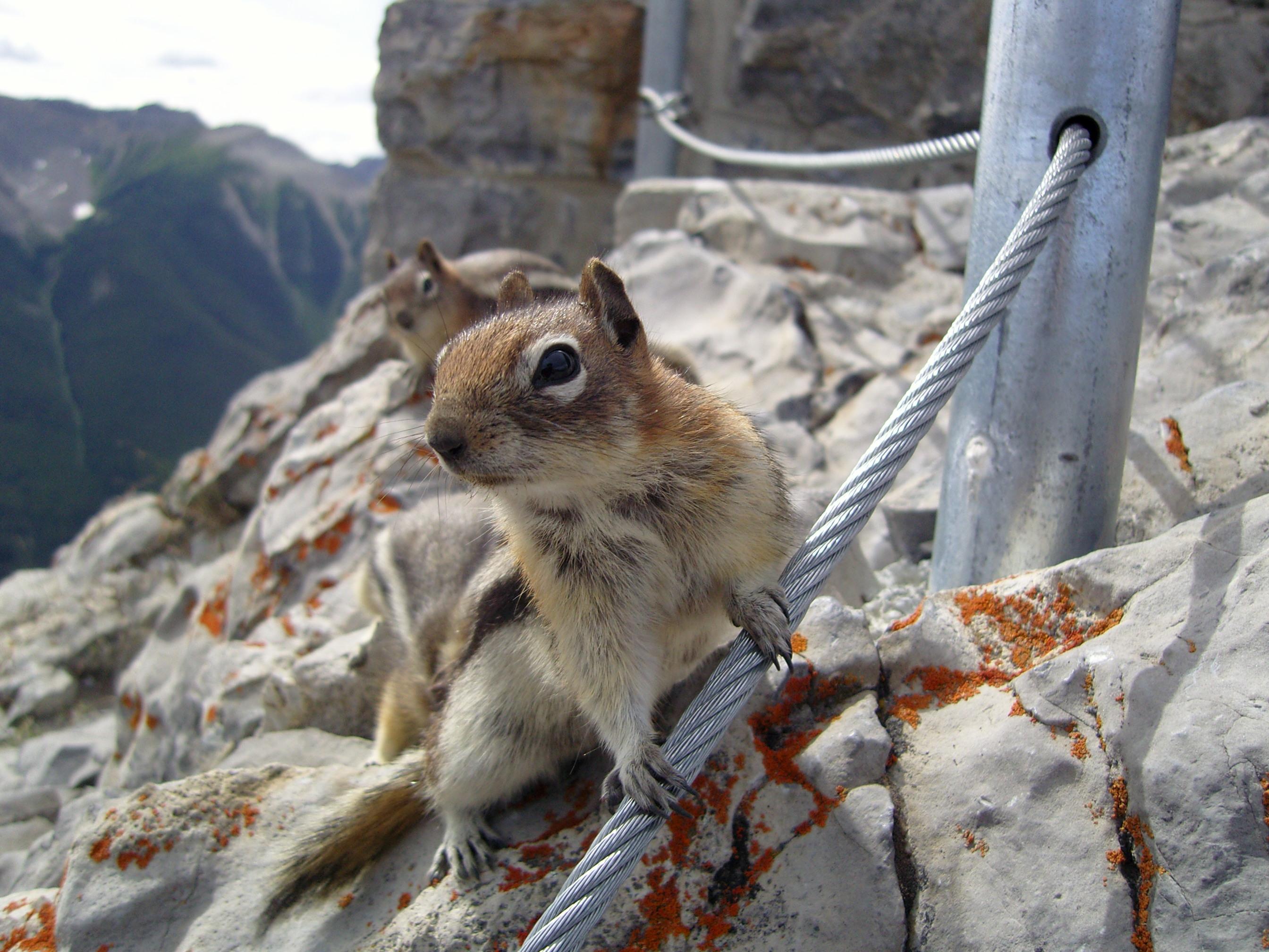 Cartoon Squirrel hijacks vacation photo