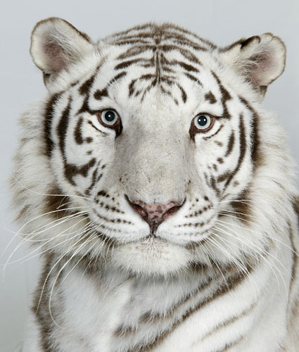 Animal Galleries Pictures Of Animals From Around The World Wild