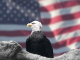 Eagle American Bald picture aguila Eagle_and_American_Flag_by_Bubbels