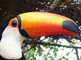 Toucan Photo Gallery