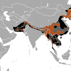 Asian Black Bear distrobution map area
