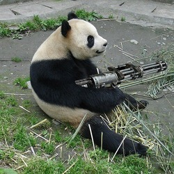 Giant Panda Bear machine gun funny