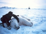 Polar Bear arctic Noaa-polar35