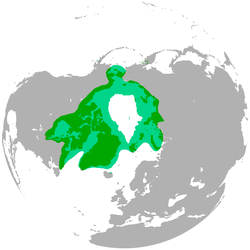 Polar_bear distrobution range_map