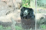 Sloth Bear Photo Gallery