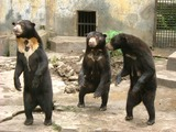 Sun Bear group medan old zoo