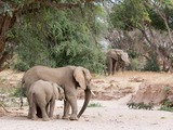 Desert elephants in the Huab River