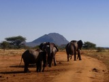 African Elephant Loxodonta_africana_group_on_a_dirt_road_2_(edited)