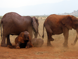 African_Bush_Elephants_in_Tsavo_East_National_Park