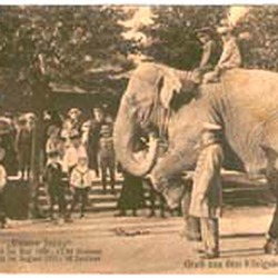 Asian Elephant Indian Elephant Joy Ride