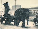 Asian Elephant Indian Ww1-elephant