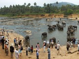 Asian Elephant Indian water2