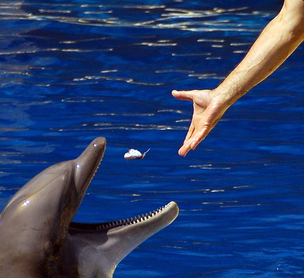 about the bottlenose dolphin essay