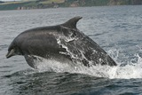 Bottlenose Dolphin Photo Gallery