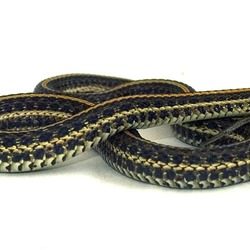 picture snake Colubridae garden serpent gater Thamnophis common Plains_gartersnake