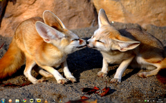 Fennec Fox cubs kissing