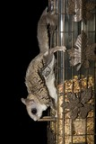 Flying Squirrel Photo Gallery