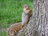 Tree Squirrel Photo Gallery