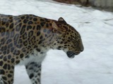 Leopard Photo Gallery